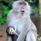 Monkey temple, Thailand by mackasenior