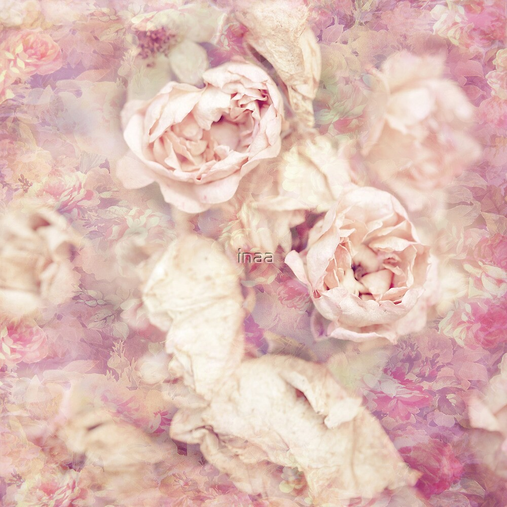 Sunday afternoon roses by VIA INA