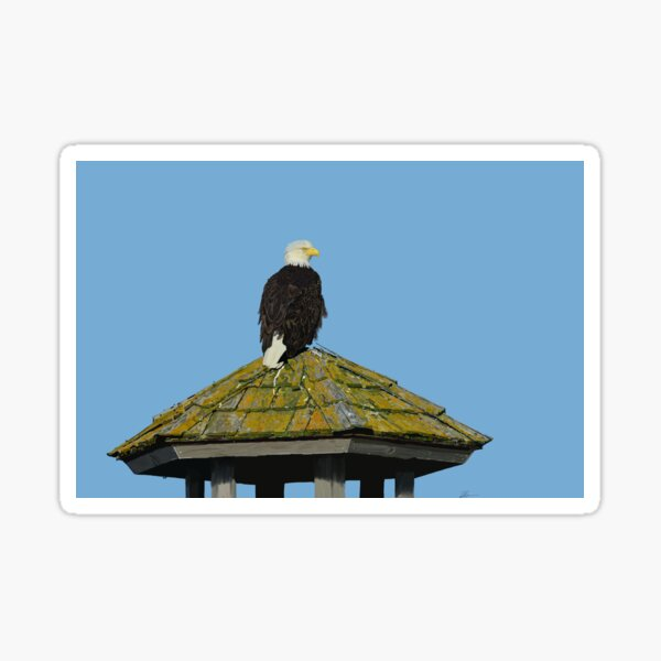 American Bald Eagle on Overwatch art drawing Sticker
