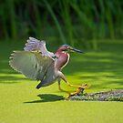 Landing by Daniel  Parent
