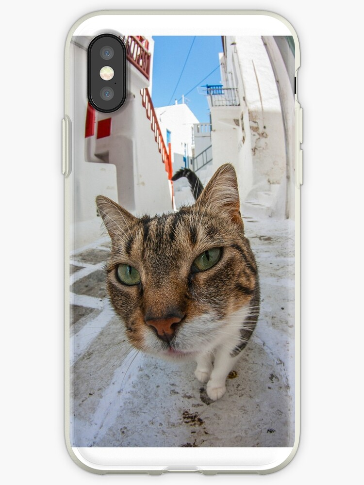Big Head Cat in Greece by jasonksleung