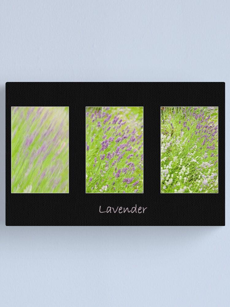 Alternate view of Lavender Trio Canvas Print