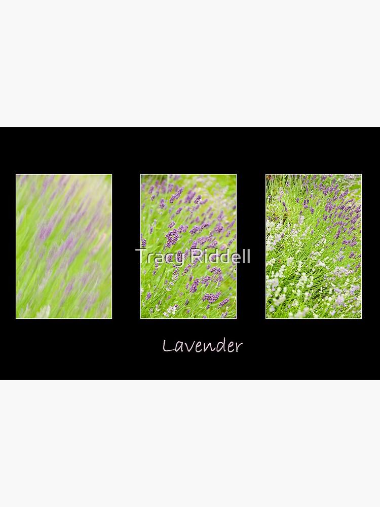 Lavender Trio by taos