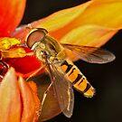 Pollination 30 by Gareth Jones