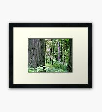Forest Quiteness Framed Print