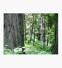 Forest Quiteness Photographic Print