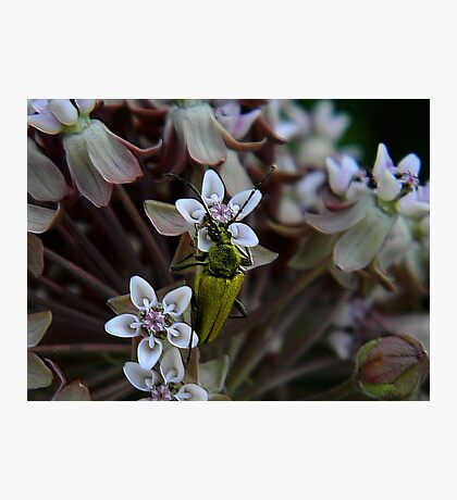 My First Bug Capture ! Photographic Print