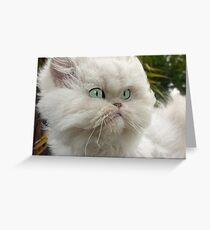 """Princess Kendra Series"" Momma Gave Me Hair Cut Greeting Card"