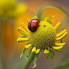 Rest a while by Mandy Disher
