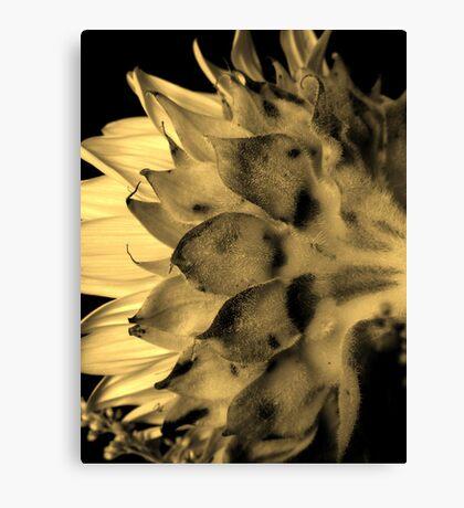 Split tone Sunflower - Sepia Canvas Print