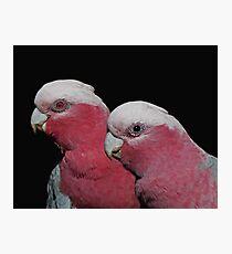 Mr and Mrs Galah Photographic Print