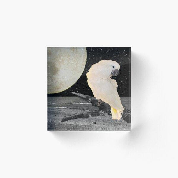 Umbrella Cockatoo Parrot on Moonlit Beach A242 Acrylic Block