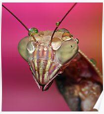 Summer Mantis! Poster