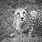 Can A Leopard Change Its Spots? by Eric Scott Birdwhistell