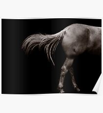 Horse Tail Poster