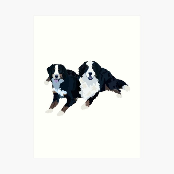 Bernese Mountain Dogs  Art Print