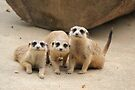 Our Cuteness Comes In A Package Deal, 3 For 1! by Leanne Allen