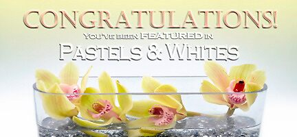 Pastels & Whites Feature Banner Entry by Susana Weber