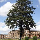 The Tree at Witley Court by John Dalkin