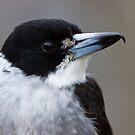 Grey Butcherbird by Will Hore-Lacy