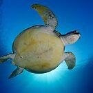 Turtle Sun by Carlos Villoch