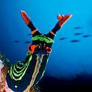 Nudibranch by Carlos Villoch