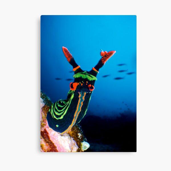 Nudibranch Canvas Print