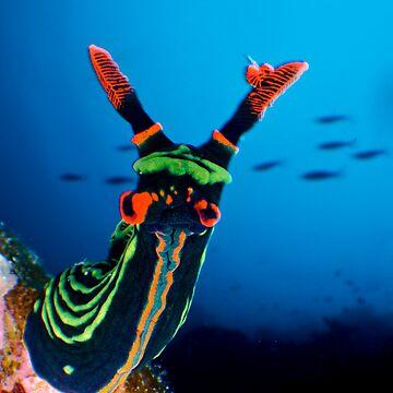 Nudibranch by underwaterart