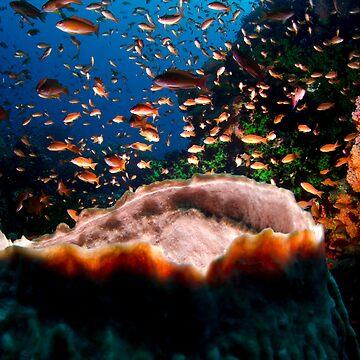 Coral Reef by underwaterart