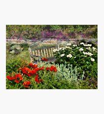 Flower - Poppy - Poppies  Photographic Print