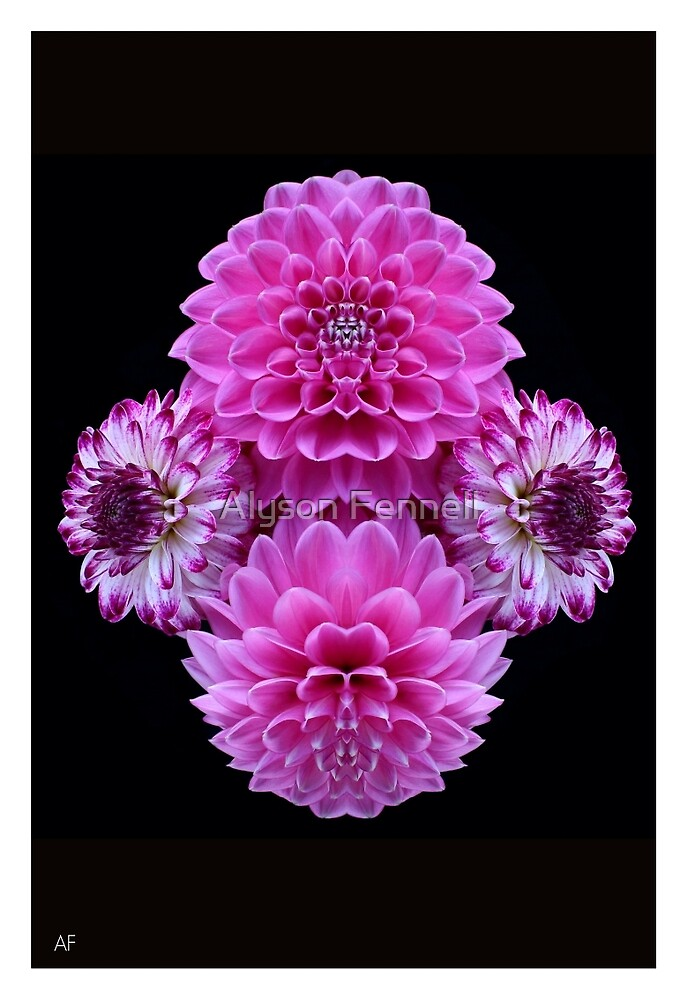 Pink Dahlia Mirror by Alyson Fennell