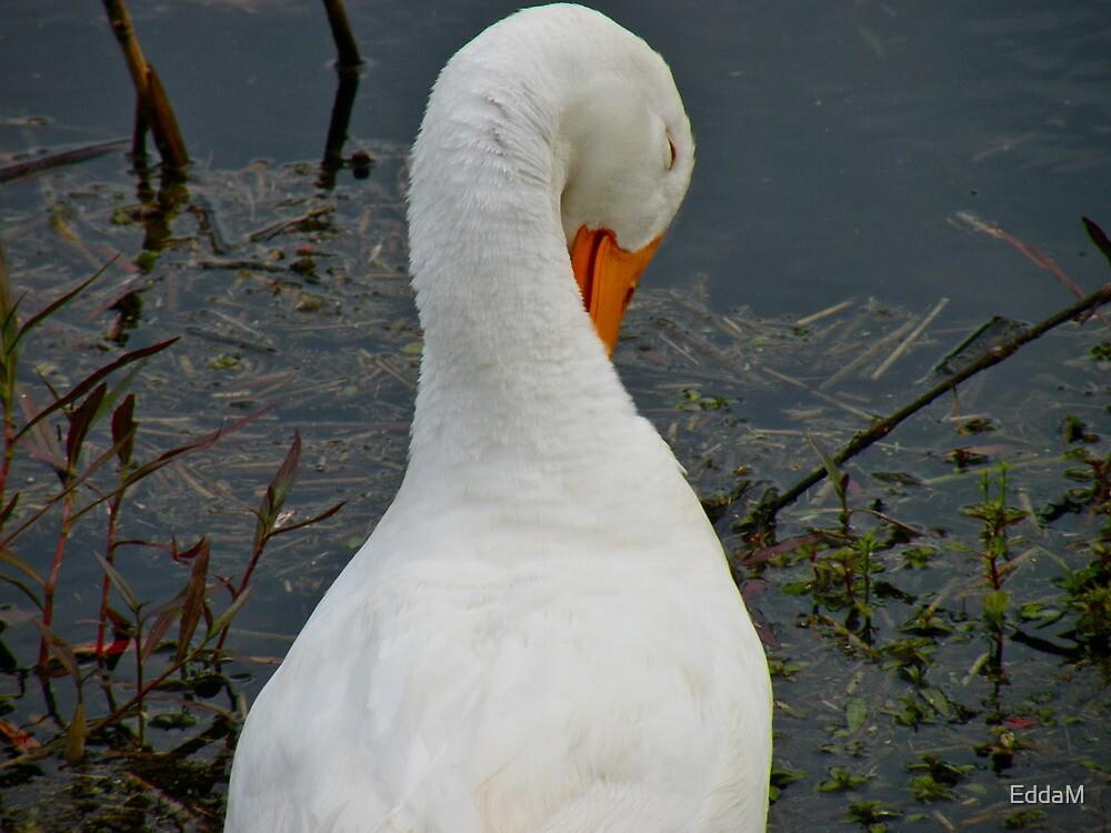 Lone Duck by EddaM