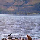Devoted dog and mocking bird-Lake District by Tibbs