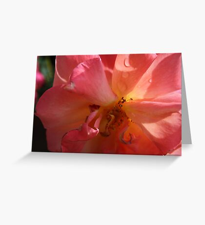 A PINK ROSE JUST FOR YOU  Greeting Card