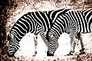 In Harmony - Zebra  by Foxfire