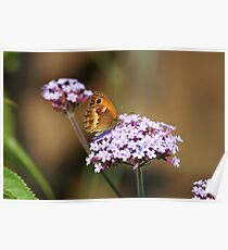 The Gatekeeper on Verbena Borienses Poster
