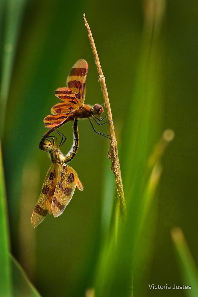 Bug Love by Victoria Jostes