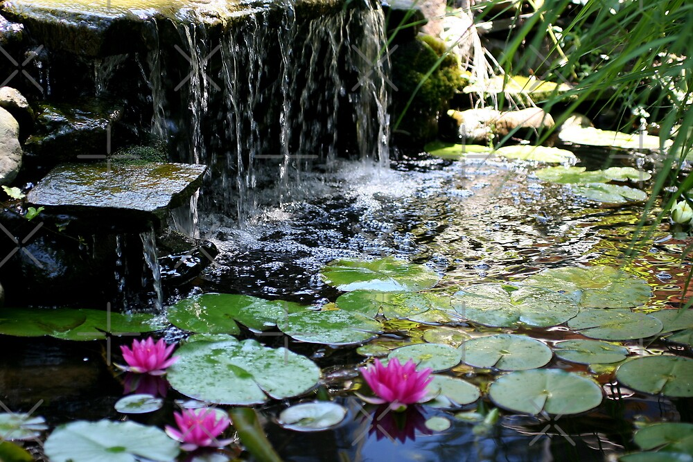 Tropical jungle pond by mikrin