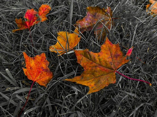 Autumn Colors - Leafs on the grass by beautiful-world