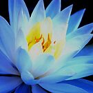 Blue waterlily by loiteke