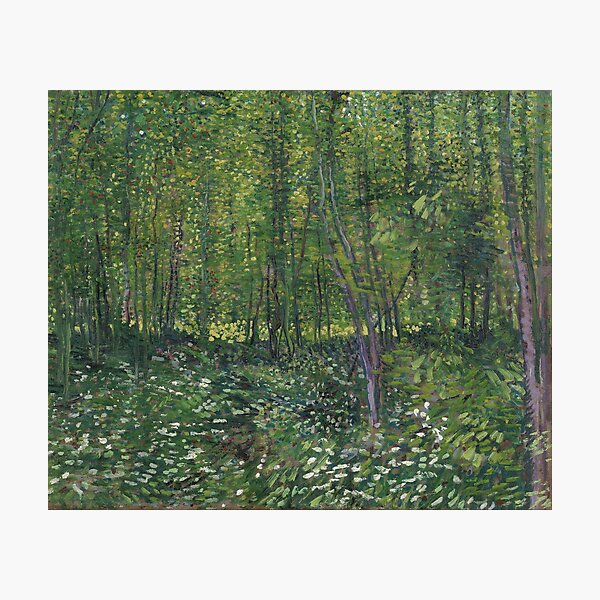 Vincent Van Gogh - Trees and Undergrowth Photographic Print
