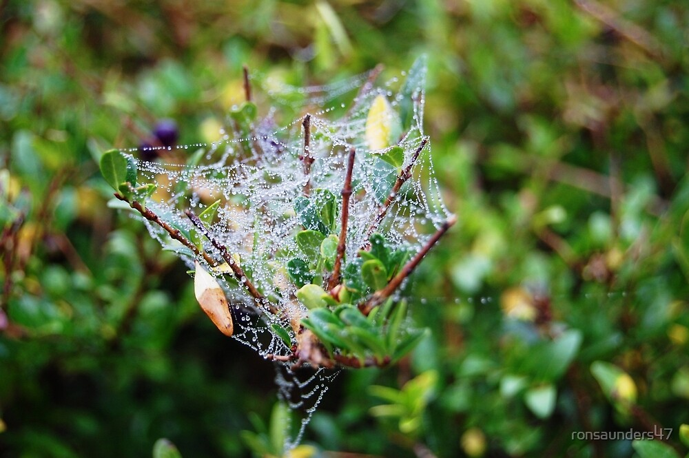 COBWEBS ON AN AUTUMN MORNING. by ronsaunders47