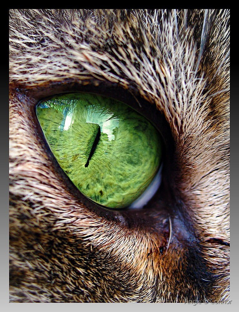 Cat Eye by Angie O'Connor