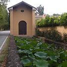 ...NINFEE  A  PARMA .....ITALY - EUROPA - MONDO - by Guendalyn