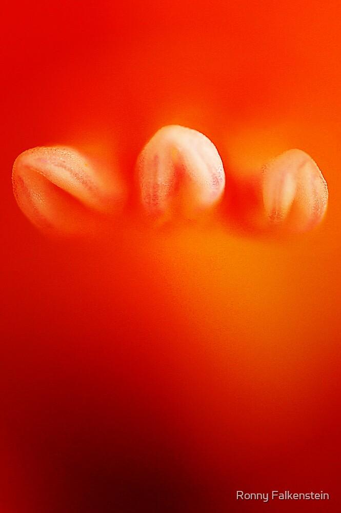 Gladiolus 3 by Ronny Falkenstein