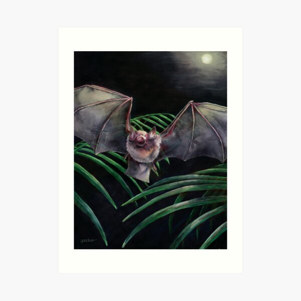Parnell's Mustached Bat Art Print