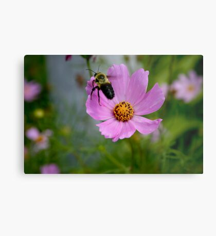 "Bumble Bee 1 ""target acquired"" Metal Print"