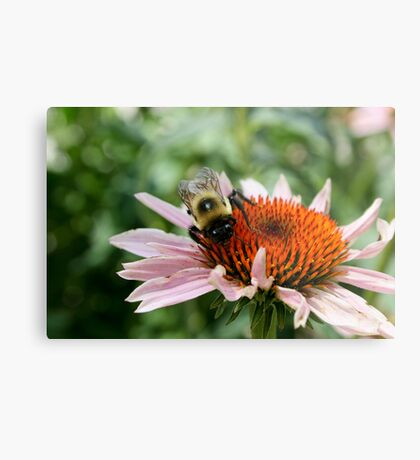 """Bumble Bee 5 """"here's lookin at you"""" Metal Print"""