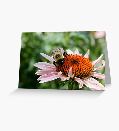 "Bumble Bee 5 ""here's lookin at you"" Greeting Card"