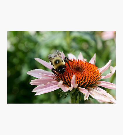 """Bumble Bee 5 """"here's lookin at you"""" Photographic Print"""
